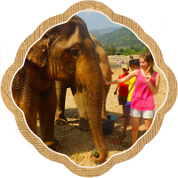 Thumbnail image for A day spent feeding, bathing, and marvelling at Elephants