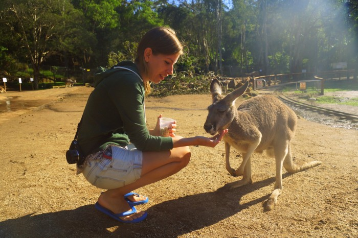 Feeding kangaroos at the Currumbin Wildlife Sanctuary