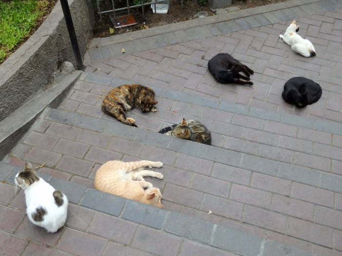 Cats in Lima