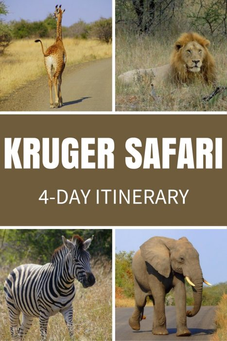 Safari in Kruger National Park: Safaris can be affordable! We did a 4-day tour of Kruger that was budget friendly. Here's our 4-day itinerary.