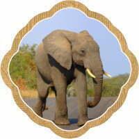 Thumbnail image for Going on safari in Kruger National Park!