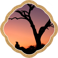 Thumbnail image for I'm in South Africa because blogger campaigns work…