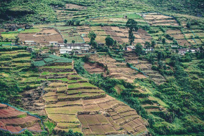 Nuwara Eilya tea plantations