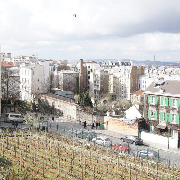 Vineyard in Montmartre, Paris
