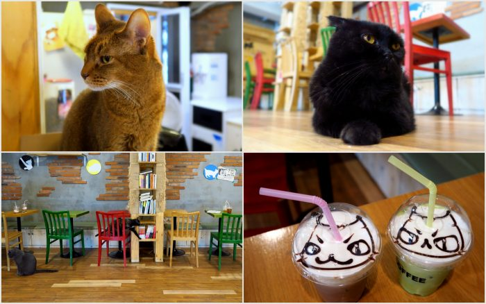 Cat Cafe - one of the most popular themed cafes in Seoul.
