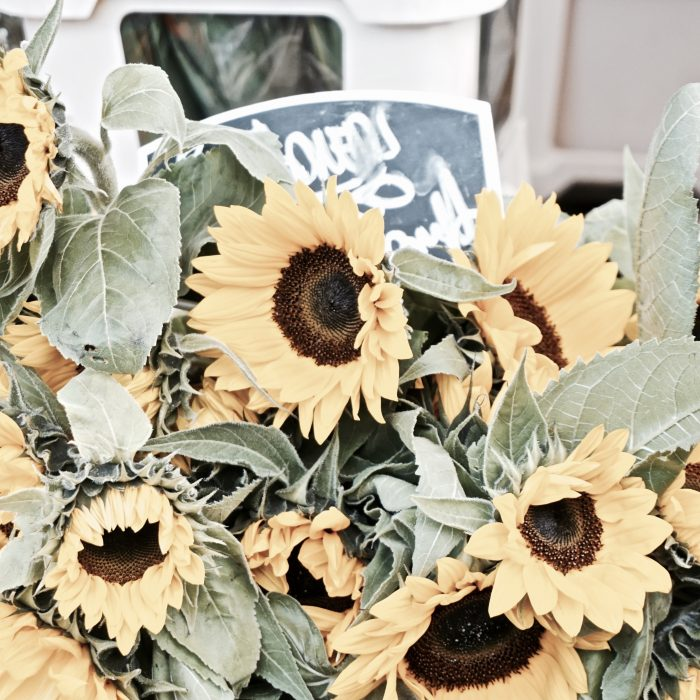 Visit the Columbia Road Flower Market