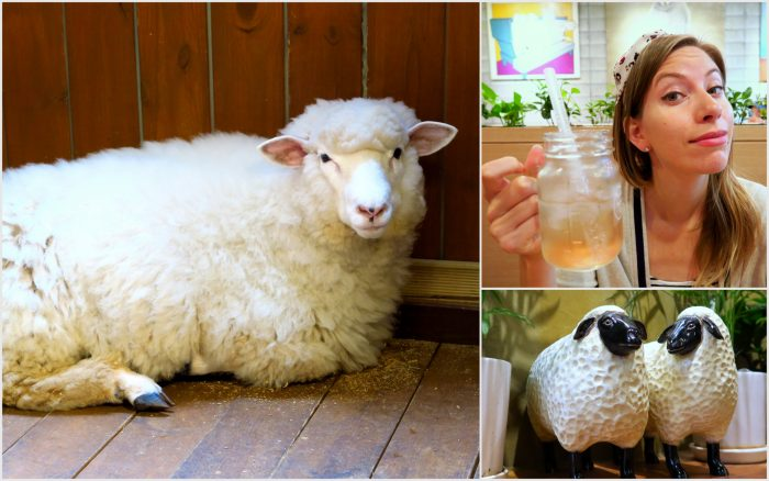 Visiting the sheep cafe in Seoul - another unusual themed cafe.