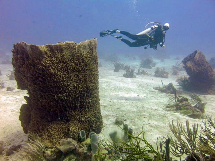 13 adventurous scuba diving ladies share their favorite - Roatan dive sites ...